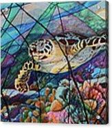 Tortuga Carey Acrylic Print