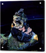 Totem Frogs Acrylic Print