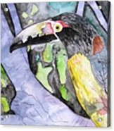 Toucan Bird Tropical Painting Fine Modern Art Print Acrylic Print