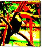 Toucan Tourcanna Acrylic Print