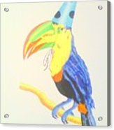 Toucan With  Party Hat Acrylic Print