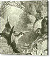 Toucans And Monkeys Acrylic Print
