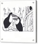 Toucans Central Park Acrylic Print