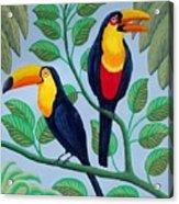 Toucans Acrylic Print