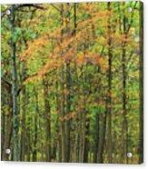 Touch Of Autumn Acrylic Print