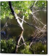 Touch Of Silence Acrylic Print