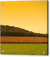Touched By Golden Light - Battlefield Orchards Acrylic Print