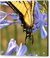 Touching Lilly Acrylic Print