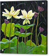 Touching Lotus Blooms Acrylic Print
