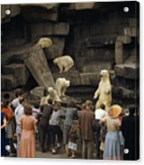 Tourists Watch Captive Polar Bears Acrylic Print