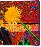 Toward Light 35 Acrylic Print