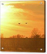 Towards Sunset Acrylic Print