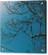 Towards The Light Acrylic Print