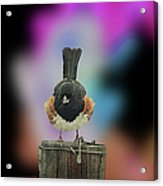 Towee On The Post Acrylic Print