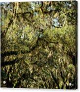 Towering Canopy Acrylic Print