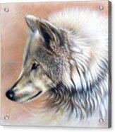 Trace IIi Acrylic Print