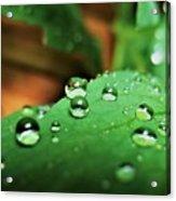 Traces Of Rain Acrylic Print