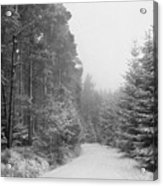 Track, Winter, Slaley Woods Acrylic Print