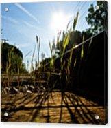 Tracks And Weeds II Acrylic Print