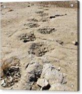Tracks In The Desert 6 Acrylic Print