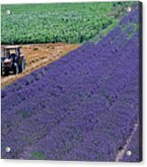 Tractor In A Lavender Field Acrylic Print