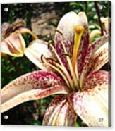 Traditional Art Lily Flowers Floral Garden Baslee Troutman Acrylic Print
