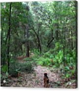 Trail Angel Acrylic Print