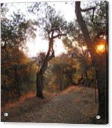 Trail At Sunrise Acrylic Print
