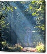 Trail In Morning Light Acrylic Print