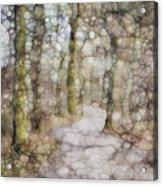 Trail Series Acrylic Print