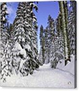 Trail Through Trees Acrylic Print by Garry Gay