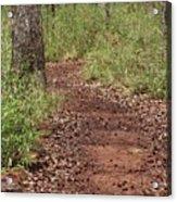 Trail To Beauty Acrylic Print