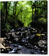 Trail To Chimney Top Acrylic Print