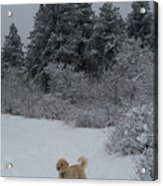 Traildog Loving The Winter Scene In The Flatirons Acrylic Print