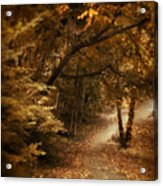 Trailing Autumn Acrylic Print