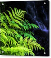 Trailside Plants Acrylic Print