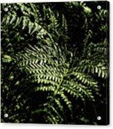 Tranquil Botanical Ferns Acrylic Print