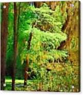 Tranquil Forest Acrylic Print