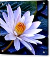 Tranquil Lily Acrylic Print