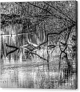 Tranquil May 2016 Bw Acrylic Print