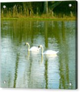 Tranquil Reflection Swans Acrylic Print