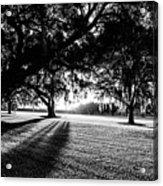 Tranquility Amongst The Oaks Acrylic Print