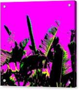 Transgenesis Acrylic Print by Eikoni Images