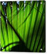 Translucent Green Acrylic Print