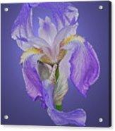 Translucent Iris Acrylic Print