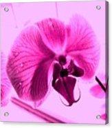 Translucent Purple Petals Acrylic Print
