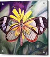 Transparent Butterfly Acrylic Print