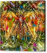 Trapped Butterfly Acrylic Print