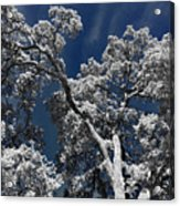 Trapped In Ice Acrylic Print