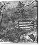 Trapping Wild Turkeys, 1868 Acrylic Print